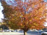 Fall, 2012
